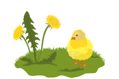 Chicken and dandelion vector Royalty Free Stock Photography