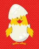 Chicken. Design over  red  background, vector illustration Stock Photo