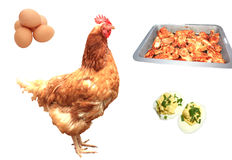 Chicken dinner concept Royalty Free Stock Photography