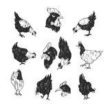Chicken doodle black. Vector doodle chicken icon set. Isolated black textured chicken icon for logo, web site design, app, UI. Doodle animal illustration for Royalty Free Stock Images