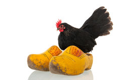 Chicken on Dutch wooden clogs Stock Images
