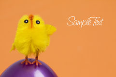 Chicken on Easter Egg Royalty Free Stock Photos