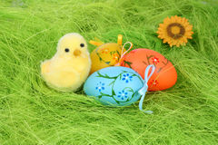 Chicken and easter eggs Stock Images