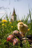 Chicken on easter eggs. Easter Eggs in an Romanian garden Stock Image