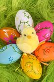 Chicken and Easter eggs Stock Photo