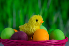 Chicken between easter eggs in basket closeup Royalty Free Stock Images