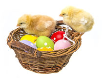 Chicken and easter eggs in a basket Royalty Free Stock Photos