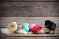 Chicken with Easter eggs. On wooden background Stock Image