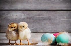 Chicken with Easter eggs. On wooden background Stock Images