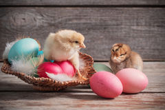 Chicken with Easter eggs. On wooden background Royalty Free Stock Images