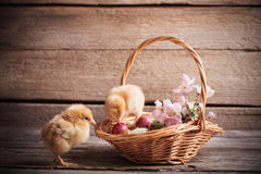 Chicken with Easter eggs. On wooden background Royalty Free Stock Photo