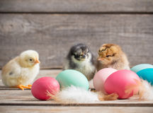 Chicken with Easter eggs. On wooden background Royalty Free Stock Photos