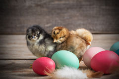 Chicken with Easter eggs. On wooden background Stock Photos