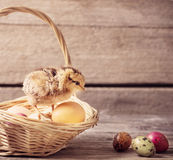 Chicken with Easter eggs. On wooden background Stock Photography