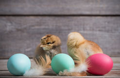 Chicken with Easter eggs. On wooden background Royalty Free Stock Photography