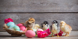 Chicken with Easter eggs. On wooden background Royalty Free Stock Image