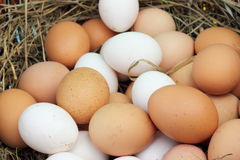 Chicken ecological eggs Stock Image