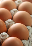 Chicken egg Stock Photography