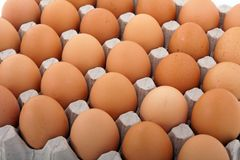 Chicken egg Royalty Free Stock Photos