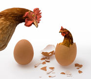 Chicken or Egg on White, Philosophy Question, Who Was the First. Idea of Philosophical Dilemma Stock Illustration