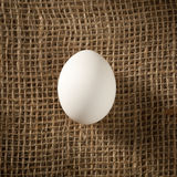 Chicken egg Royalty Free Stock Photography