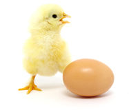 Chicken and egg Stock Photos