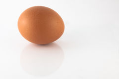 Chicken Egg. One chicken egg wth reflection Stock Photos