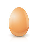 Chicken egg. Vector illustration on white background EPS10. Transparent objects and opacity masks used for shadows and lights drawing Stock Images