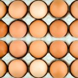 Chicken egg background Stock Image
