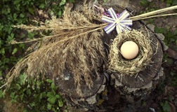 Chicken egg in the bird nest Royalty Free Stock Photos