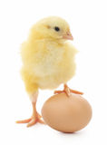 Chicken and egg Royalty Free Stock Photos