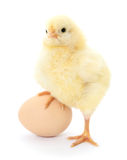 Chicken and egg Stock Image