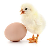 Chicken and egg Royalty Free Stock Photography