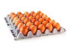 Chicken egg. In carton box royalty free stock image