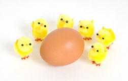 Chicken egg and chickens Royalty Free Stock Photos