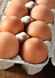 Chicken egg closeup Stock Images
