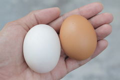 Chicken Egg and duck egg on my hand. Shopping white and brown fresh hens eggs on my hand Stock Photo