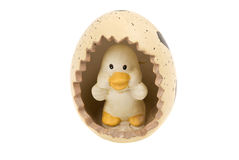 Chicken egg easter Royalty Free Stock Photo