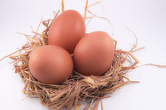 Chicken egg Stock Image