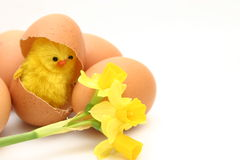 Chicken, egg and flowers Stock Photos