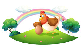 A chicken with an egg. Illustration of a chicken with an egg on a white background Royalty Free Stock Photos