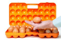 Chicken egg lies in palm of plastic container Stock Images