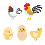Chicken egg life cycle Royalty Free Stock Photos