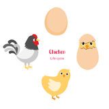Chicken egg life cycle Royalty Free Stock Photography