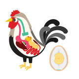 Chicken egg life cycle Royalty Free Stock Images