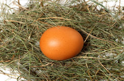 Chicken egg in nest. Brown chicken egg in nest royalty free stock images