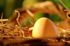 Chicken egg in the nest. Egg in the morning light Stock Photo