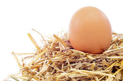 Chicken egg in a nest Stock Photography
