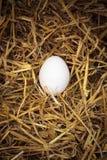 Chicken egg in nest in henhouse Stock Images