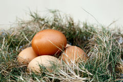 Chicken egg in nest Royalty Free Stock Images